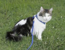 Photo of Daisy, a cat