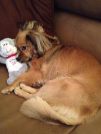 Photo of Bertie, a dog