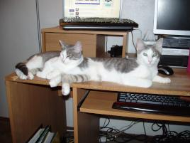 Photo of Freya and Loki, a cat