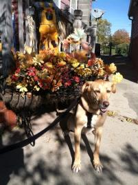 Photo of Rose, a dog