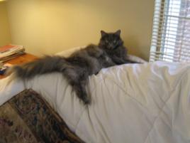 Photo of Skye, a cat