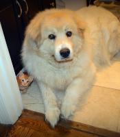 Photo of Conan, a dog