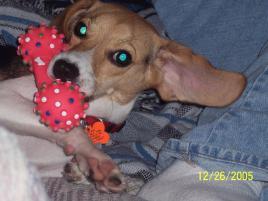 Photo of Ellie Mae, a dog