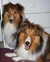 Photo of Baxter & Tucker, a dog