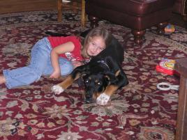 Photo of Sarge, a dog