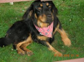 Photo of April, a dog