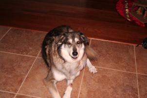 Photo of Sam (AKA Puppy), a dog