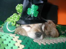 Photo of Milli Vanilli, a dog