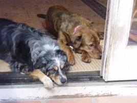 Photo of Abby and Chaco, a dog