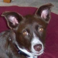 Photo of Bella, a dog