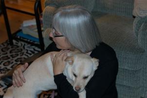 Photo of Callie, a dog