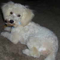 Photo of Caden, a dog