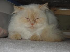 Photo of Buster, a cat