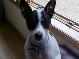 Photo of Angel, a dog