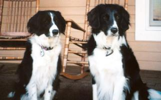 Photo of Buster and Missy, a dog