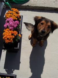 Photo of Tommy, a dog