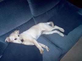Photo of Josie, a dog