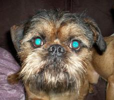 Photo of Bert, a dog