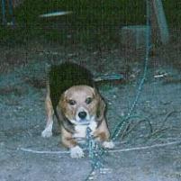 Photo of KD, a dog