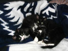 pet adoption stories   charlotte and sprock petfinder