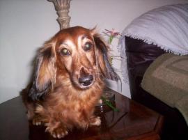 Photo of Dixie Love, a dog