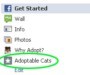Facebook adoptable cats