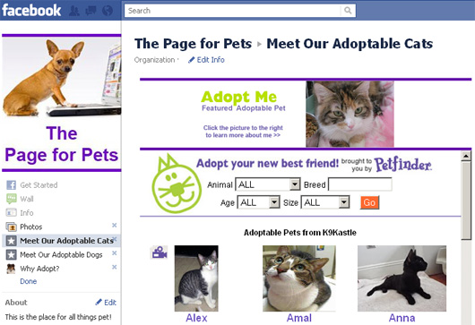 meet our adoptable cats