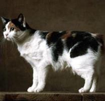 INOpets.com Anything for Pets Parents & Their Pets Manx Cat Breed