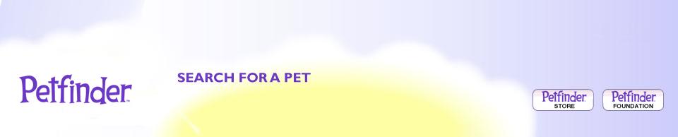 adopt a cavalier king charles spaniel dog breeds petfinder