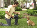 Ch. 7: How to teach your dog to sit