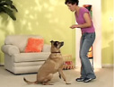Ch. 7: How to teach your dog to stay