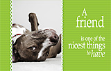 Pet Friendship Ecards