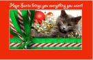 Christmas Ecards with Cats