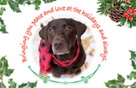 Christmas Ecards with Dogs