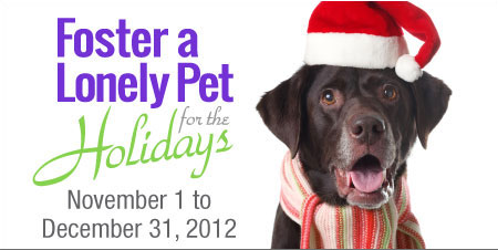 Petfinder.com Foster a pet for the holidays