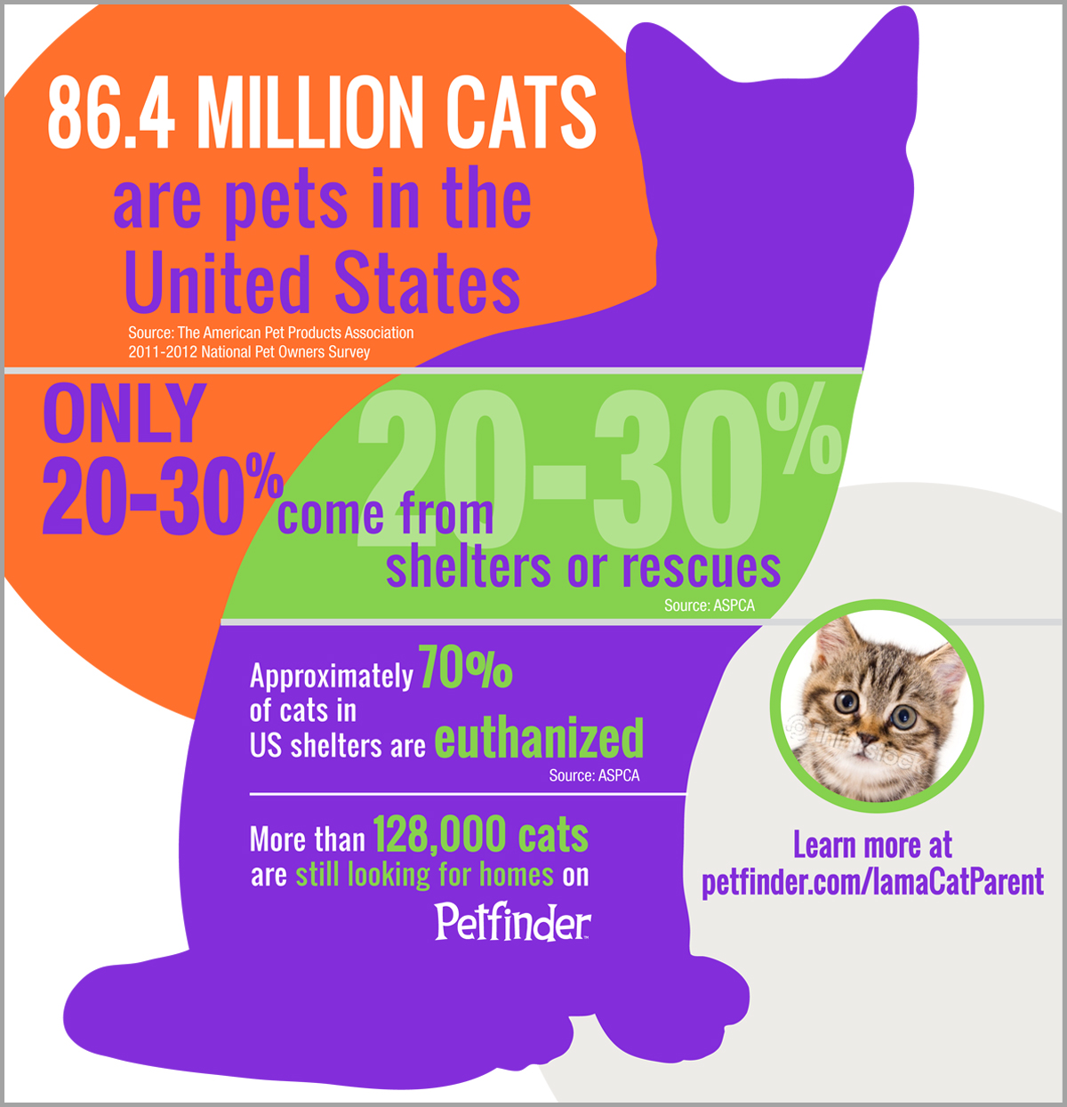 Stray animals statistics - photo#37