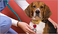 Learn about pet-health conditions