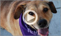 Watch our video on Older Dog Adoption