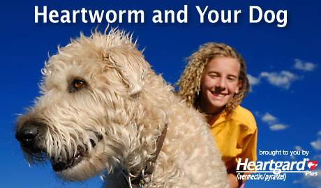 dogs and heartworm