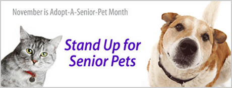 Petfinder.com Stand Up for Senior Pets