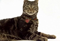Cat Breed Videos