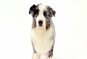 Dog Breed Videos