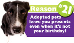 101 Reasons to Adopt a Pet