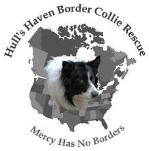 Hull's Haven Border Collie Rescue