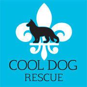 Cool Dog Rescue