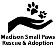 Madison Small Pups Rescue and Adoption