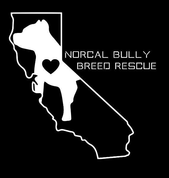 NorCal Bully Breed Rescue
