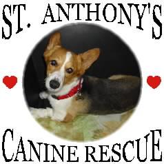 St. Anthonys Canine Rescue & Corgi Matchmaker
