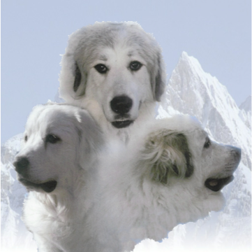 Great Pyrenees Rescue & Sanctuary