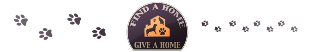 Find A Home Give A Home Pet Rescue